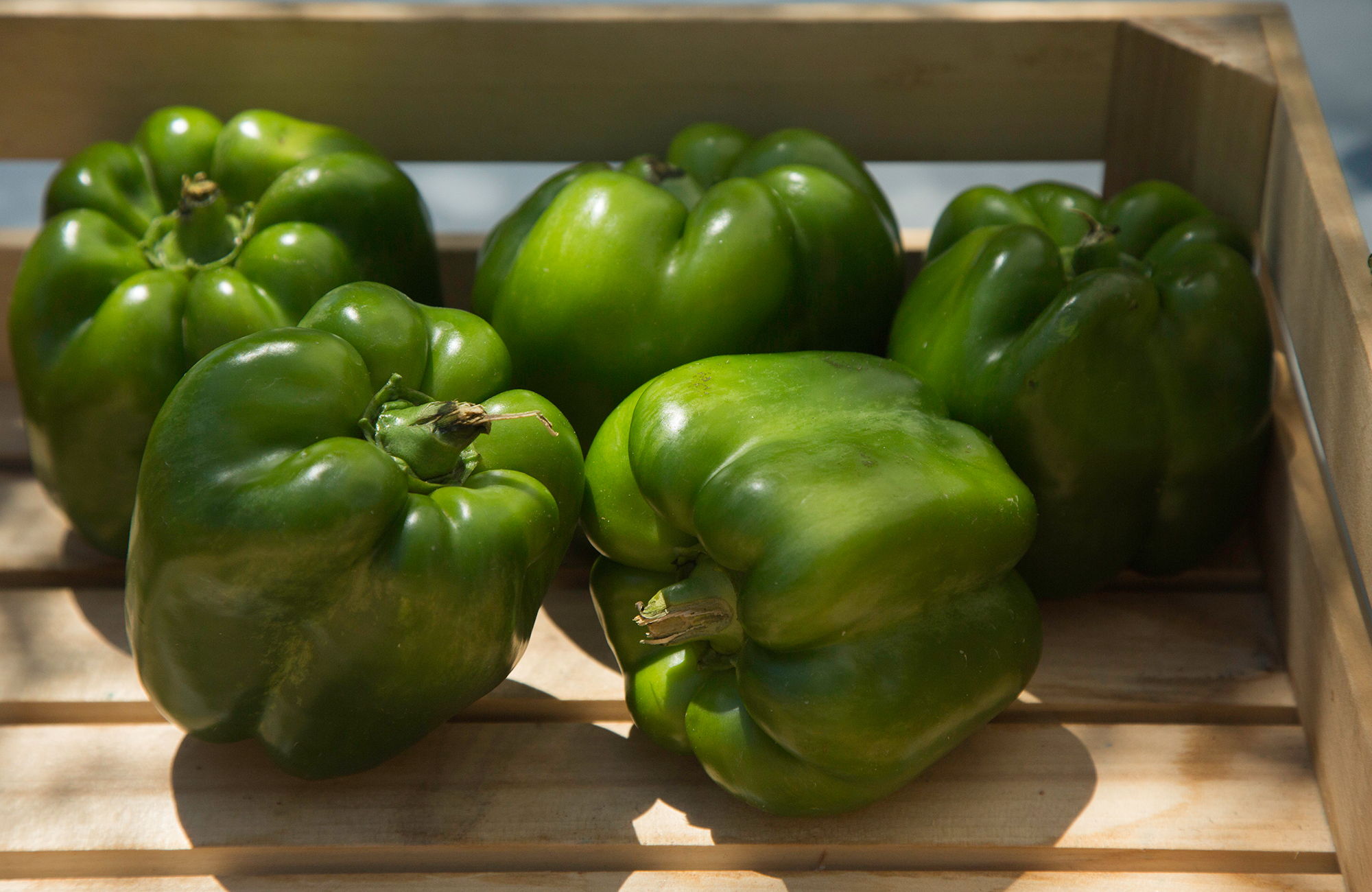 Picture of fresh bell peppers