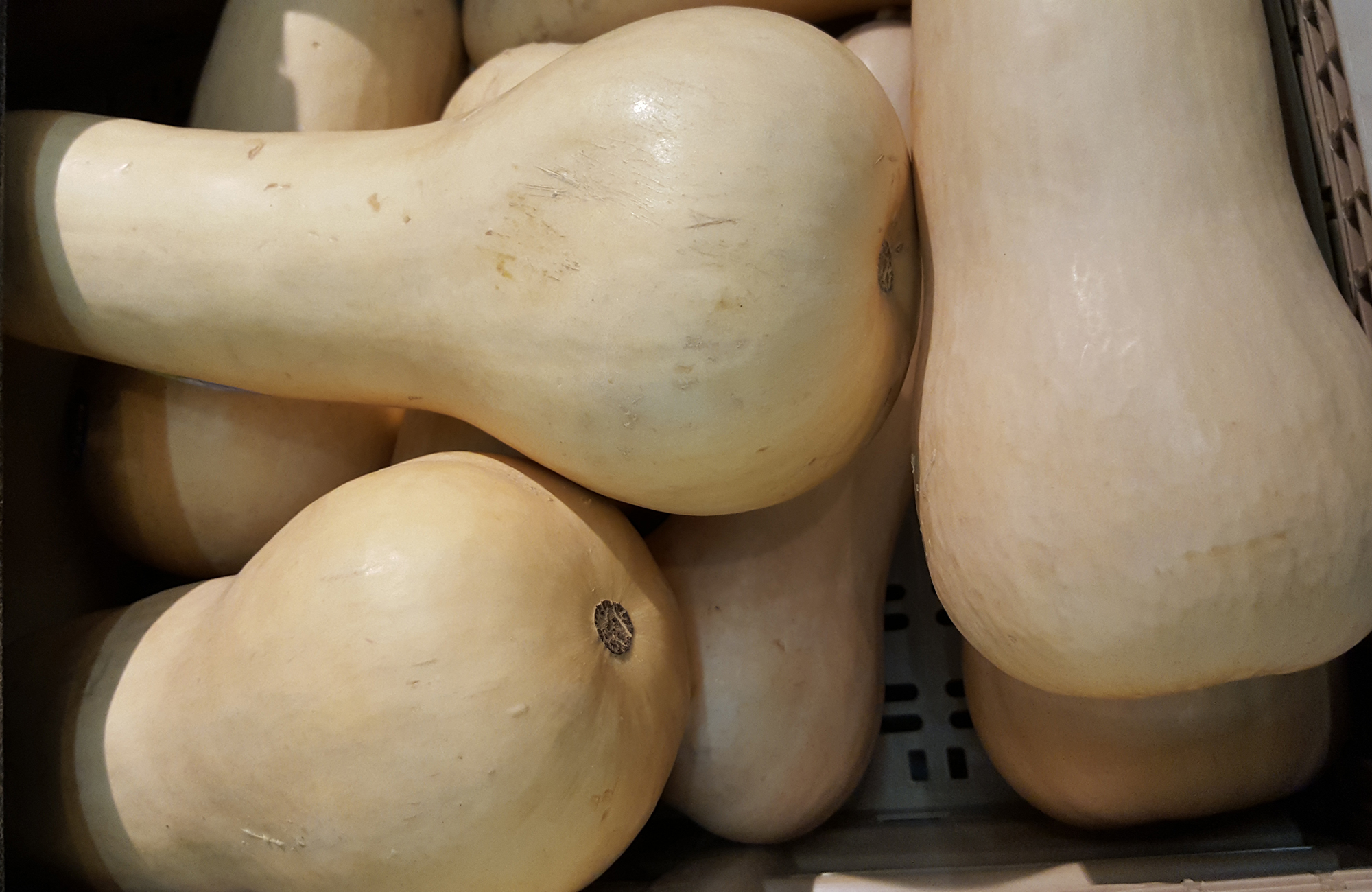 Picture of fresh butternut squash