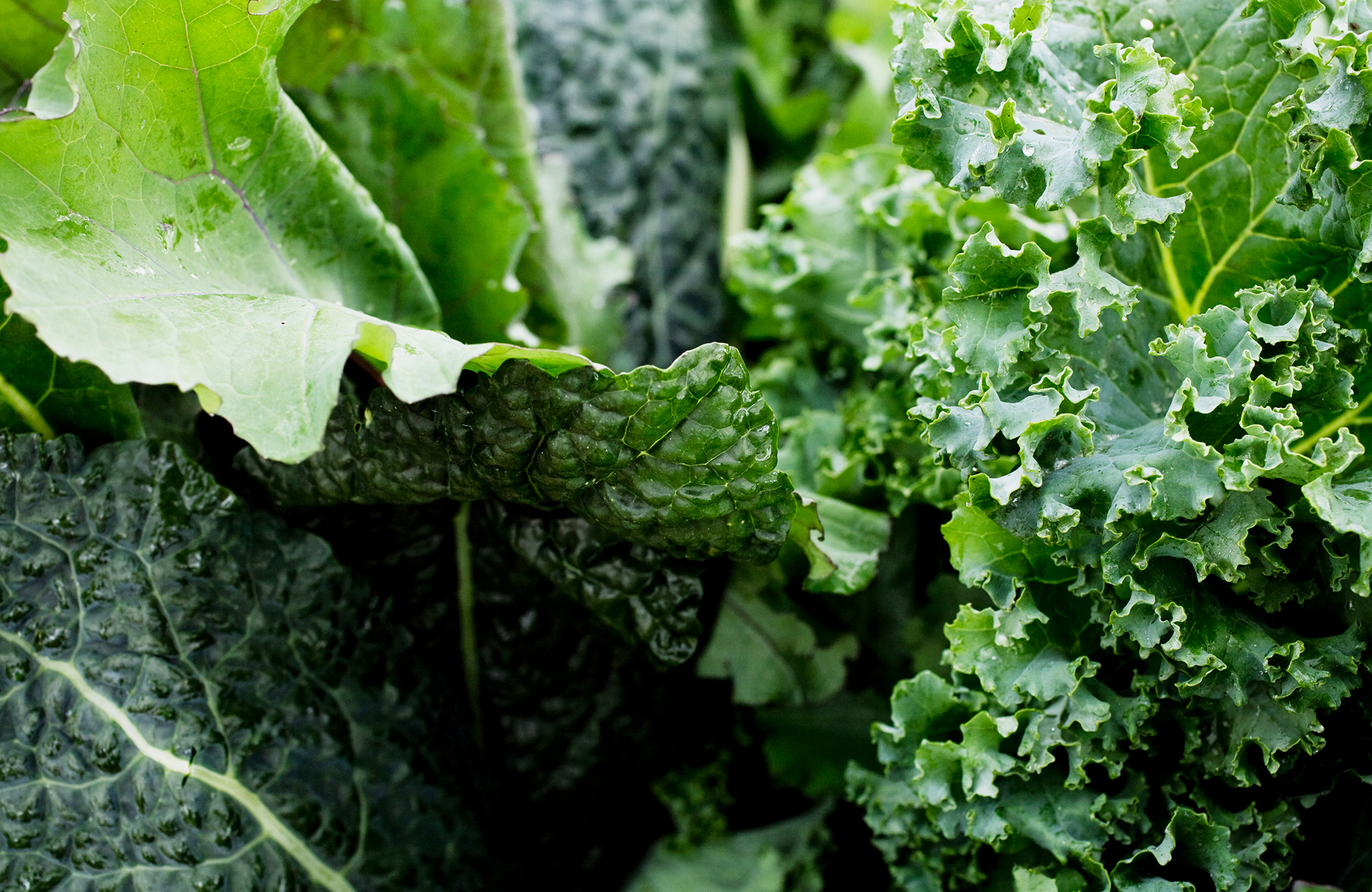 Picture of fresh kale