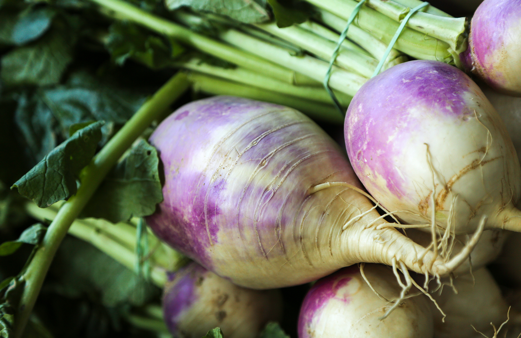 Picture of fresh turnips