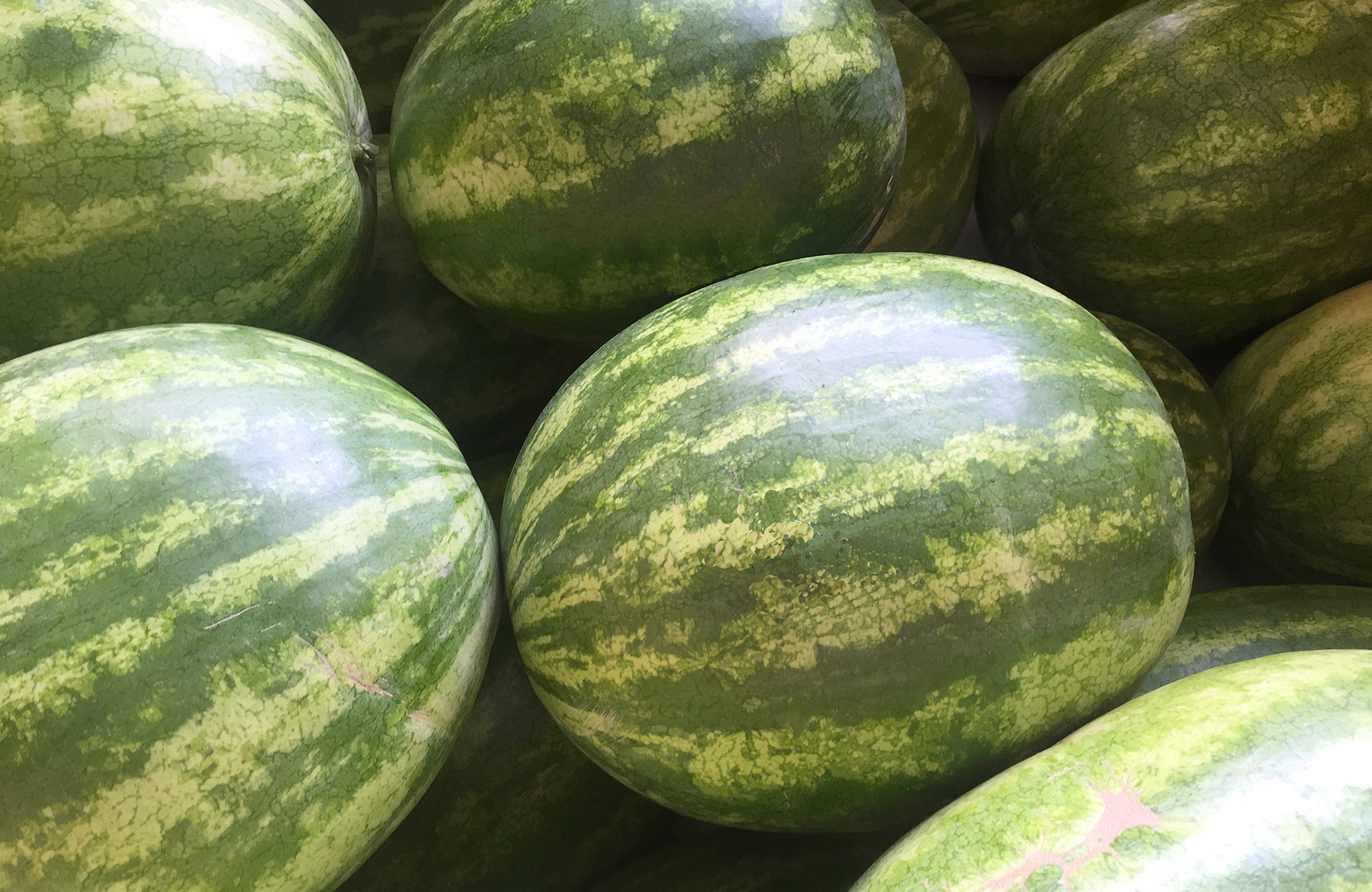Picture of fresh watermelons