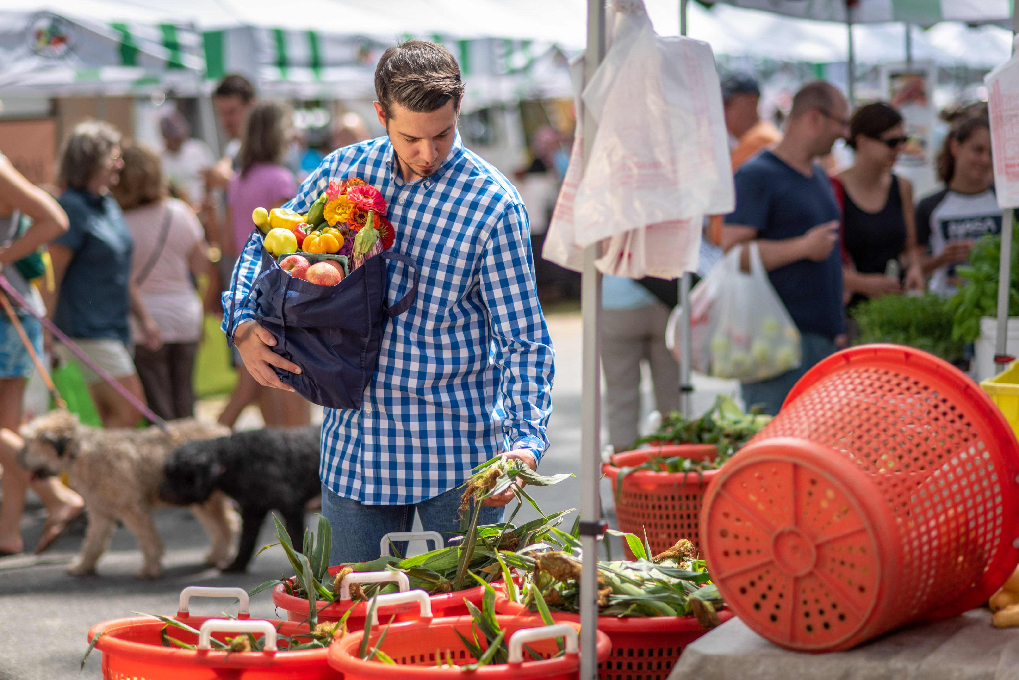Millennial stopping at vendor booth at a farmers' market with a bag of flowers and produce in arm and picking up an ear of corn in hand.