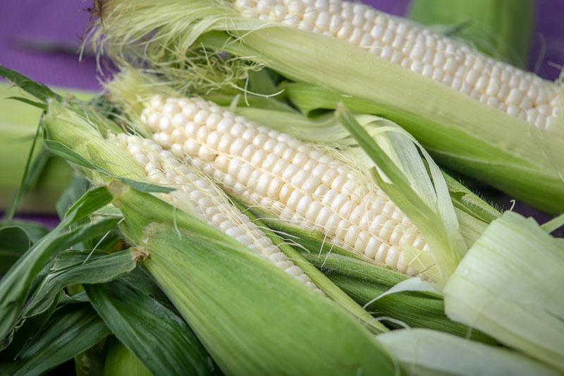 fresh corn on the cob peeled
