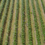Image of farmers' in a field